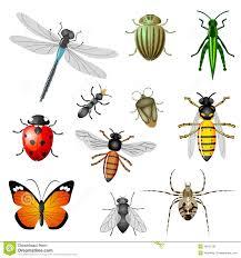 insectos 2